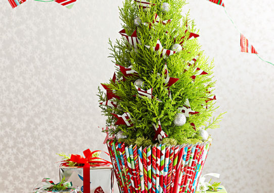 Love And Care By Gifting Flowers This Festive Seasons